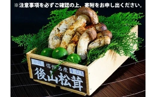 【諏訪野菜ブランディングプロジェクト】松茸