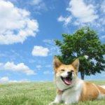 ふるさと納税でペット保護活動に支援できる!ペットグッズや宿泊券も