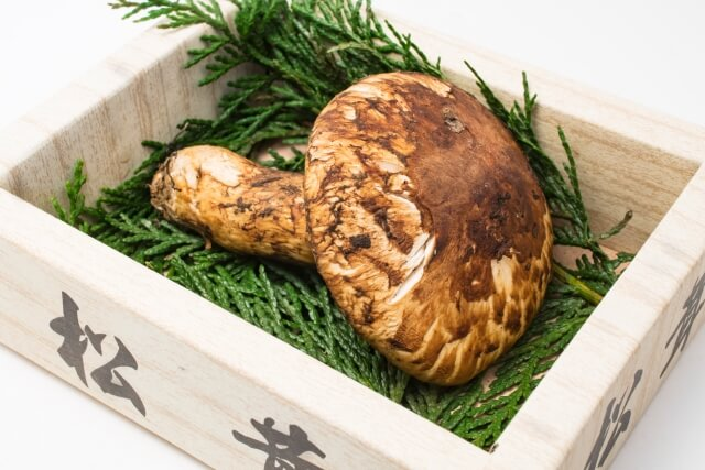 【諏訪野菜ブランディングプロジェクト】松茸 寄附金額200,000円(長野県諏訪市) イメージ