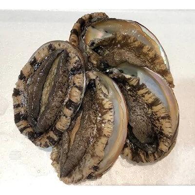 竹中水産の天然小アワビ、殻付きのままでバター焼き500グラム前後!(4個~8個目安)