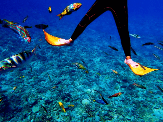 青海島体験ダイビングツアー