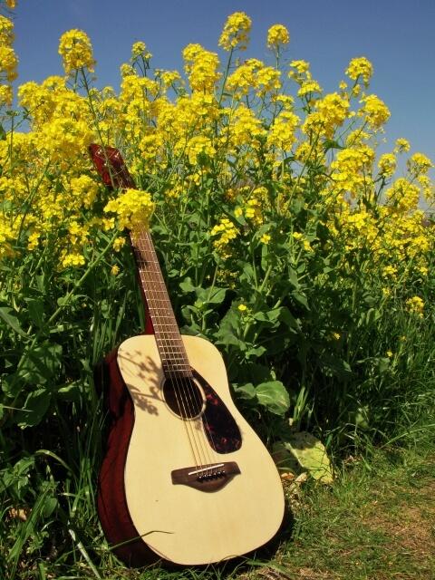 【アコースティックギター】VINCENT VN-3 Standard NL
