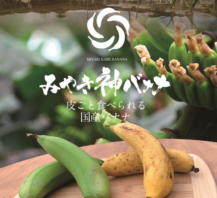 【国産バナナ】みやき神バナナ5本セット(樅箱入り) イメージ