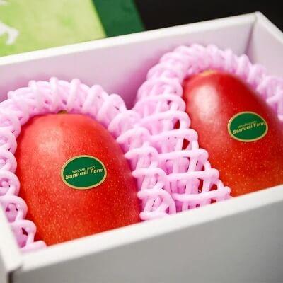 鉢植栽培 西都産完熟マンゴー L×2個