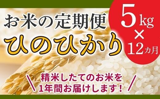 【全12回】鹿児島県産米ひのひかり5kg定期便  イメージ