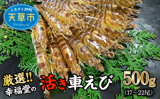 【鮮度抜群】厳選・幸福堂の活き車えび(500g)17~22尾 イメージ