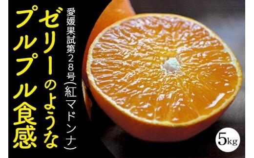 愛媛・八幡浜産「愛媛果試第28号(紅まどんな同品種):5kg」【訳あり】