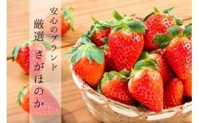 白石産いちご「さがほのか」(150g×6パック)