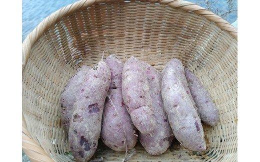 五島列島直送 無農薬 こだわりの紫芋