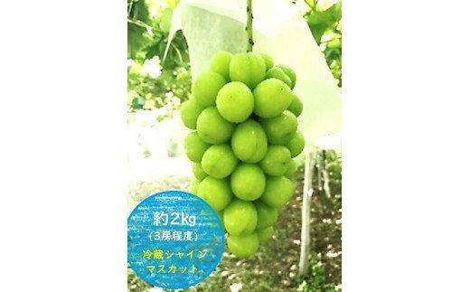 K&Y農園 長野県坂城町産 冷蔵シャインマスカット約2kg(3房程度)