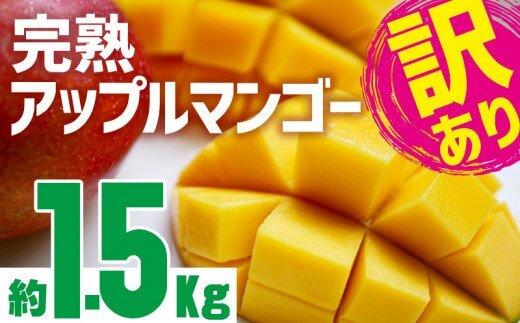 訳あり品【2021年発送】沖縄市完熟アップルマンゴー約1.5kg
