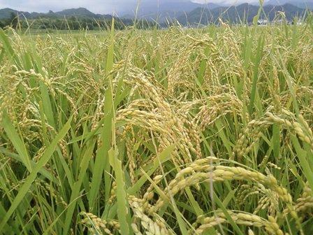 山形県金山町の返礼品 金山産米と特産品のおまけ付