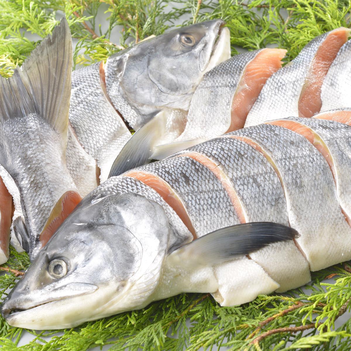 北海道白糠町 返礼品 鮭の姿切り身